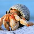 crustacé